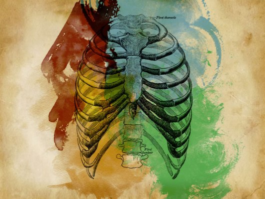 ribcage-by-Conscience-Killer-flickr.jpg